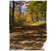 Scattered Autumn Leaves Poster