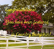 BANNER CHALLENGE FOR COUNTRY BUMPKIN by Pauline Evans