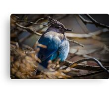 Bluebird in a Thicket Canvas Print