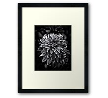 Backyard Flowers In Black And White 15 Framed Print
