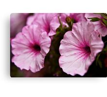 Pedals of Pink Canvas Print