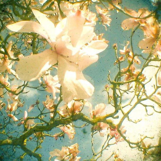 Magnolia by Cassia