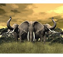 Elephant Stand Photographic Print