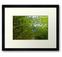 Let's Go To The Bamboo Framed Print