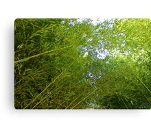 Let's Go To The Bamboo Canvas Print