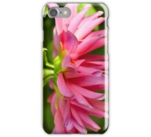 Hanging Pink Dahlia iPhone Case/Skin