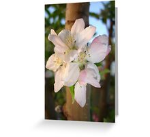 Beautiful Apple Blossom Cluster Greeting Card