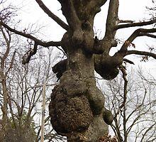 Lumpy Tree by WildestArt