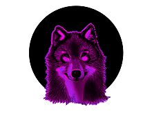 Pink wolf Photographic Print