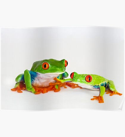 Red Eye Tree Frogs Poster