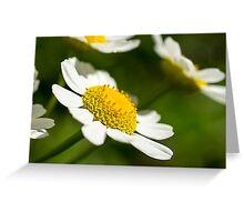 Daisy Greeting Card Greeting Card