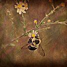 Bee by Ginger  Barritt