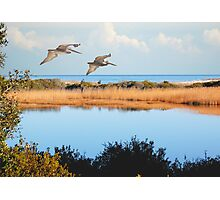 Where The Marsh Meets The Atlantic Photographic Print