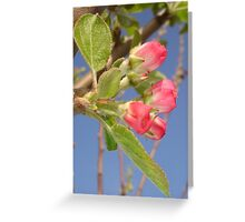 Spring Apple Blossom Flowers  Greeting Card