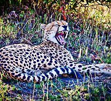 Cheetah :: Kenya Africa by Clinton Hadenham