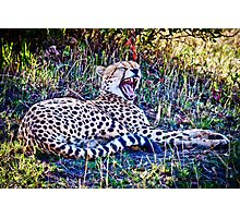 Cheetah :: Kenya Africa Photographic Print