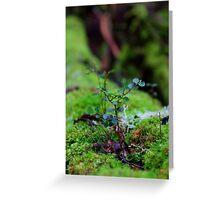 mini tree Greeting Card