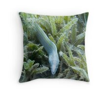 Spotted White Moray Eel, Egypt Throw Pillow