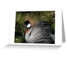 Portrait of an African Grey Crowned Crane Greeting Card