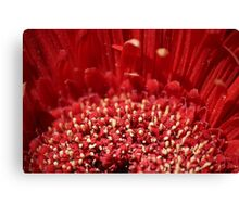 Polin Party Canvas Print