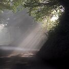 Sun Streamers by FelicityB
