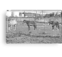 Urban Horses Canvas Print