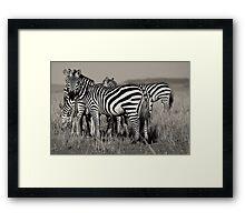 Zebras :: Masai Mara Framed Print