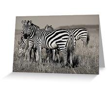 Zebras :: Masai Mara Greeting Card