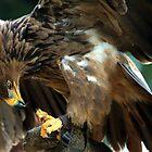 Beak and Claw by John Dalkin