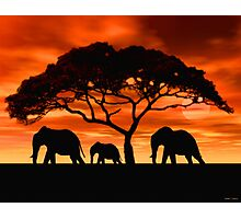 Acacia Elephant Sunset Photographic Print