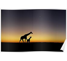 Giraffe silhouettes at sunset Poster