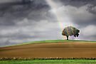 Rainbow Tree by Andrew Bret Wallis