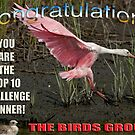 Top Ten Challenge Winner the Birds Group by imagetj