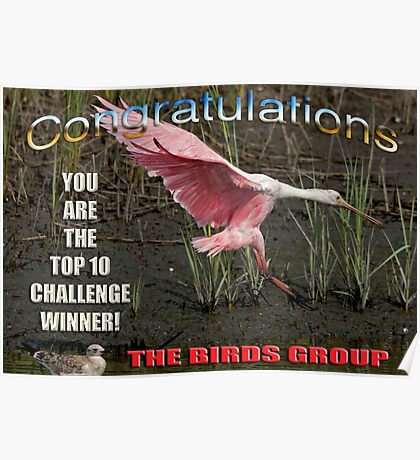 Top Ten Challenge Winner the Birds Group Poster