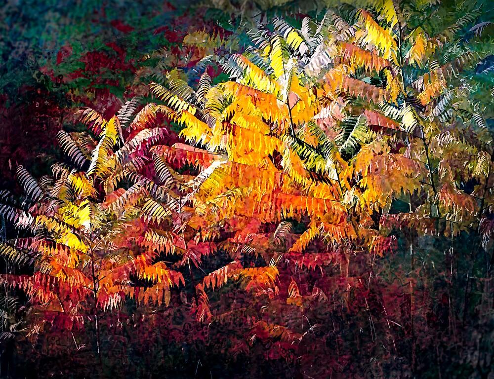 Sumac Splendour by Wib Dawson