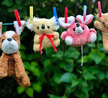 Teddies After A Bath by Orla Cahill Photography