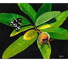 The Moth And The Medlar Photographic Print