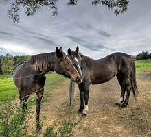 My Sweet Neighbor... by Jeremy Lavender Photography
