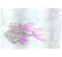 Soft dreamy lavender Poster