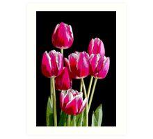 Bunch of pink tulips Art Print