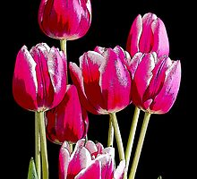 Bunch of pink tulips by sc-images