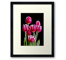Bunch of pink tulips Framed Print
