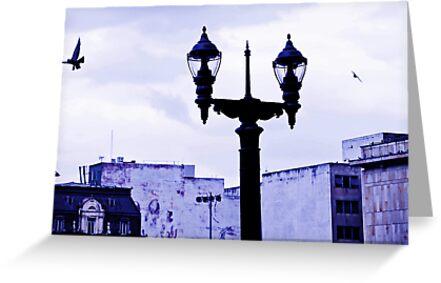 Light in the Plaza. by ALEJANDRA TRIANA MUÑOZ
