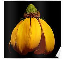 Floral Extravaganza ~ Part Four Poster
