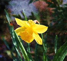 Oil painting style yellow daffodil flower photography.  by naturematters