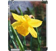 Oil painting style yellow daffodil flower photography.  iPad Case/Skin