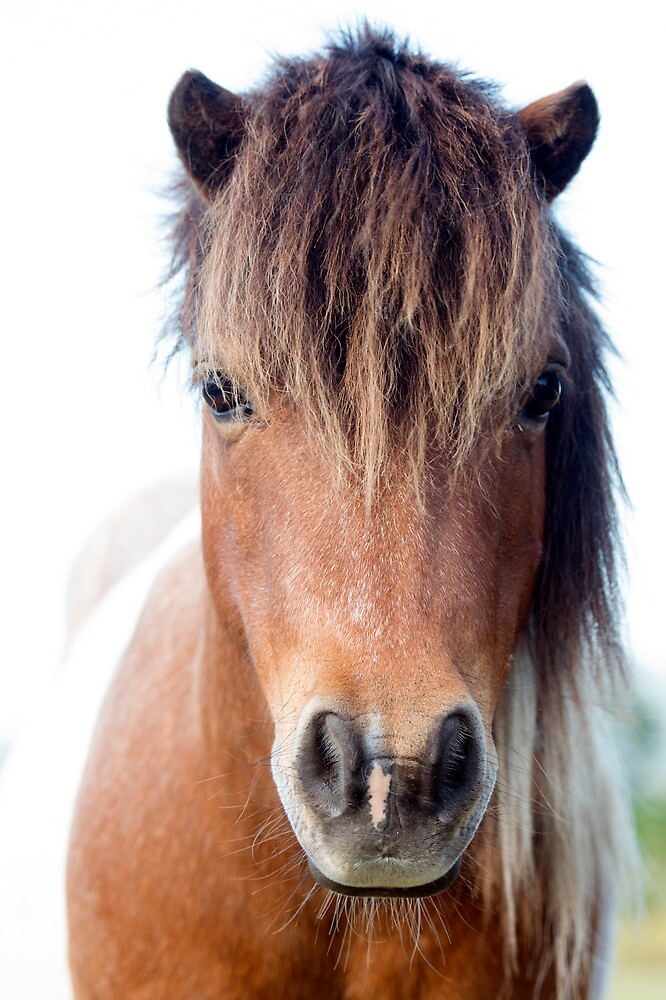 Horse with no name :)   by Jenny Dean