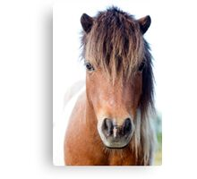 Horse with no name :)   Canvas Print