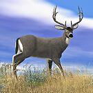 Buck Blacktail Deer by Walter Colvin