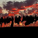 blood red sunset with flas by Tim Horton